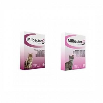 Milbactor Gatitos 4 Comp
