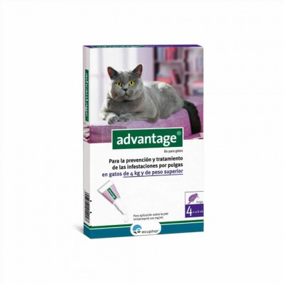 Advantage 80, Gato (+ 4 Kg)
