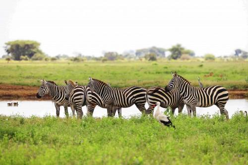 La importancia de los animales en el ecositema