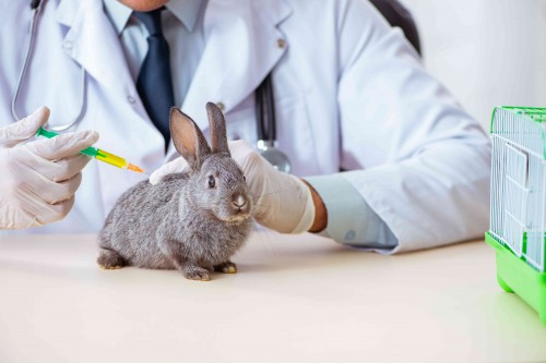La importancia de vacunar a los conejos ¿Cuáles son las enfermedades más frecuentes en conejos?
