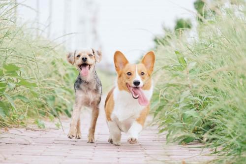 En el día Mundial del perro, ¿cuánto sabes del mejor amigo del hombre?