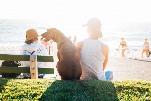 ¿Cómo afecta el calor a nuestras mascotas?