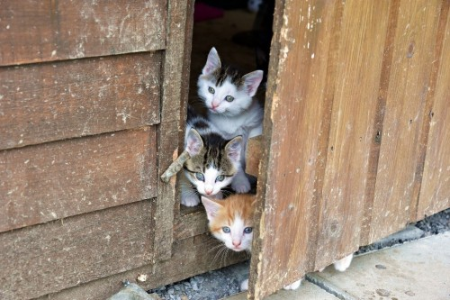 5 Beneficios de tener Gato