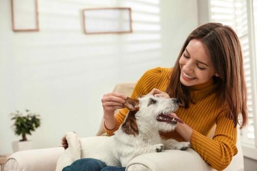 Guía de primeros auxilios de tu mascota