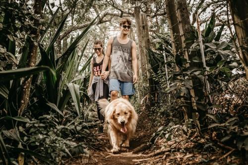Consejos y precauciones para hacer del paseo por la montaña un auténtico placer con tu perro