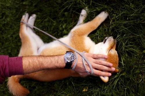 Cuidado con el parvovirus canino