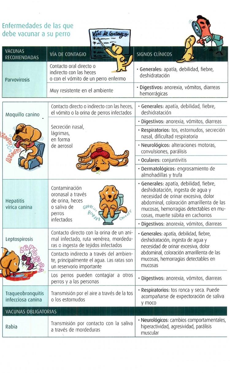 Prevenir enfermedades infecciosas – Vacunación - imagen 2