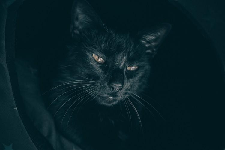 8 de agosto, día internacional de Gato ¡uno de ellos! - imagen 2