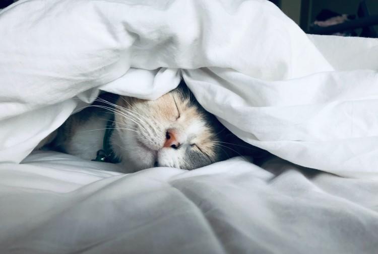 6 Consejos para tu gato
