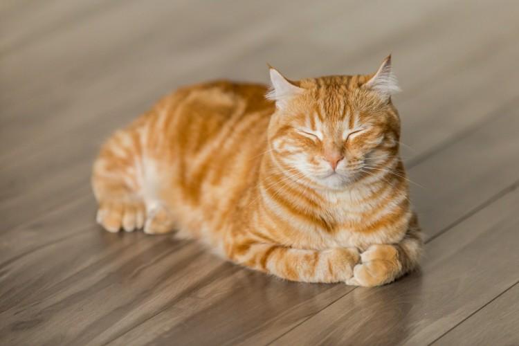 6 Consejos para tu gato - imagen 2