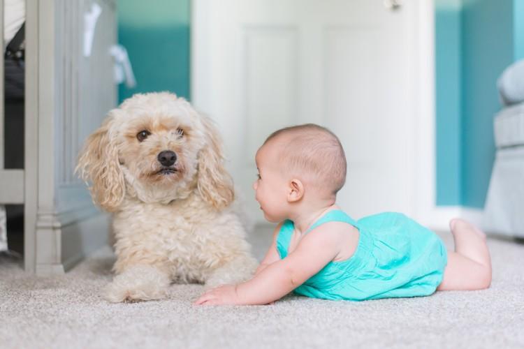 Conocer y cuidar a mi perro - Higiene