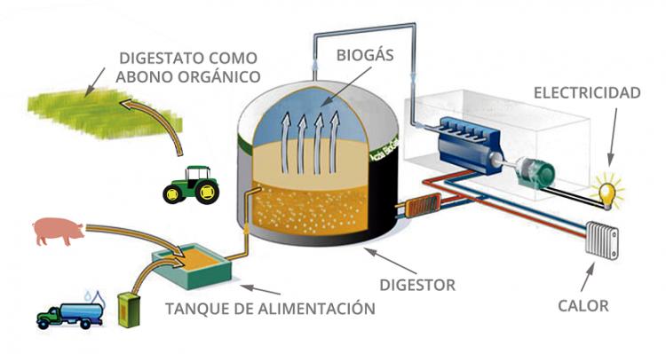 El biogás y la economía circular en ganadería - imagen 2