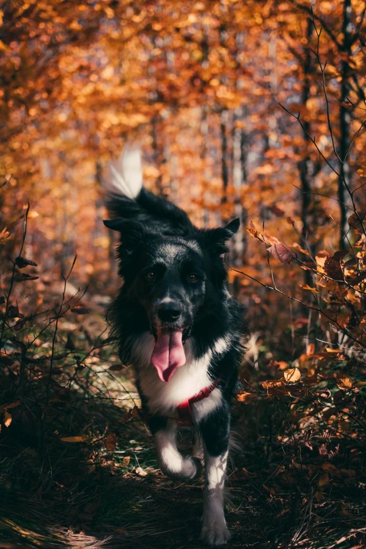 Consejos y precauciones para hacer del paseo por la montaña un auténtico placer con tu perro - imagen 3