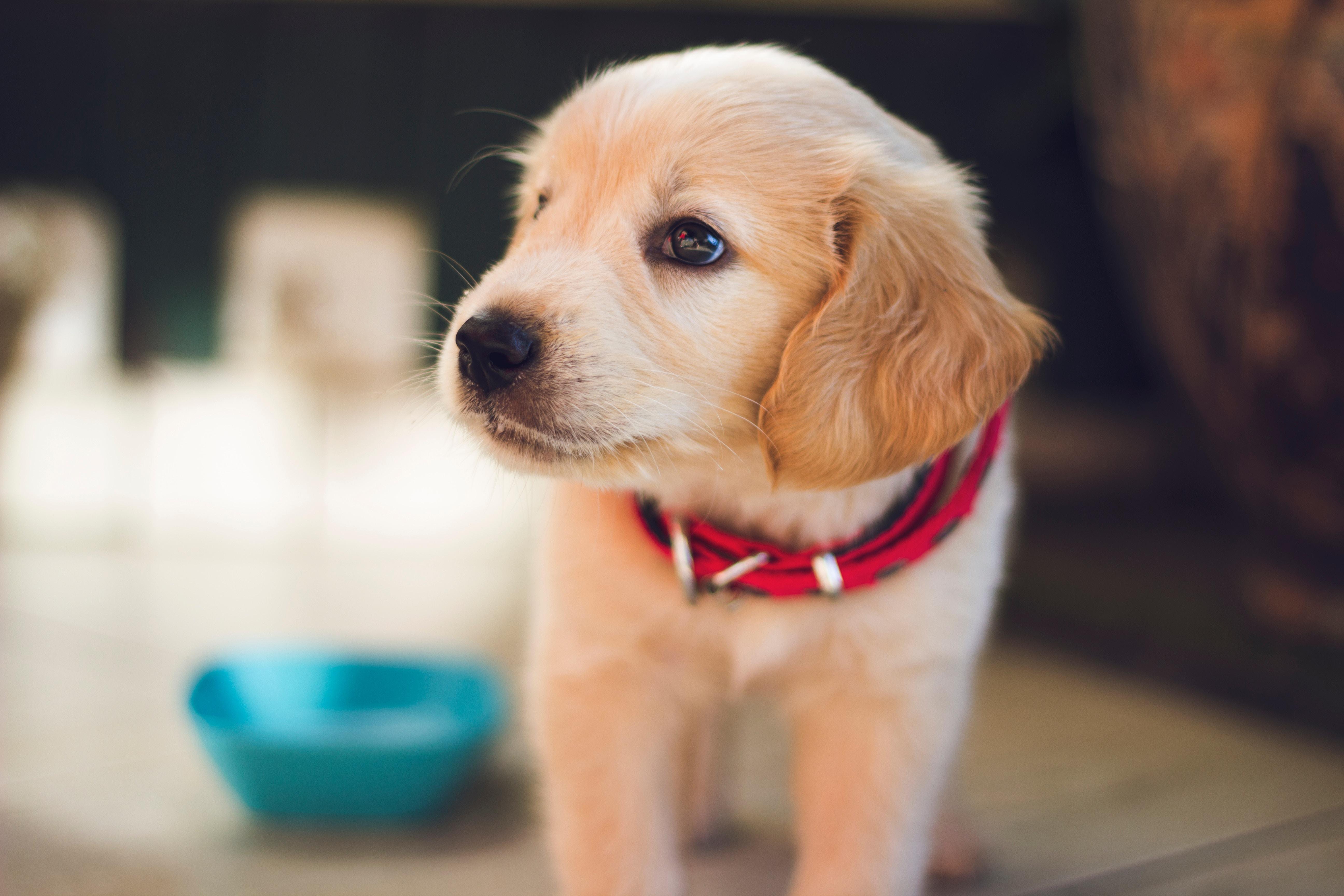 Conocer y cuidar a mi perro - Entorno