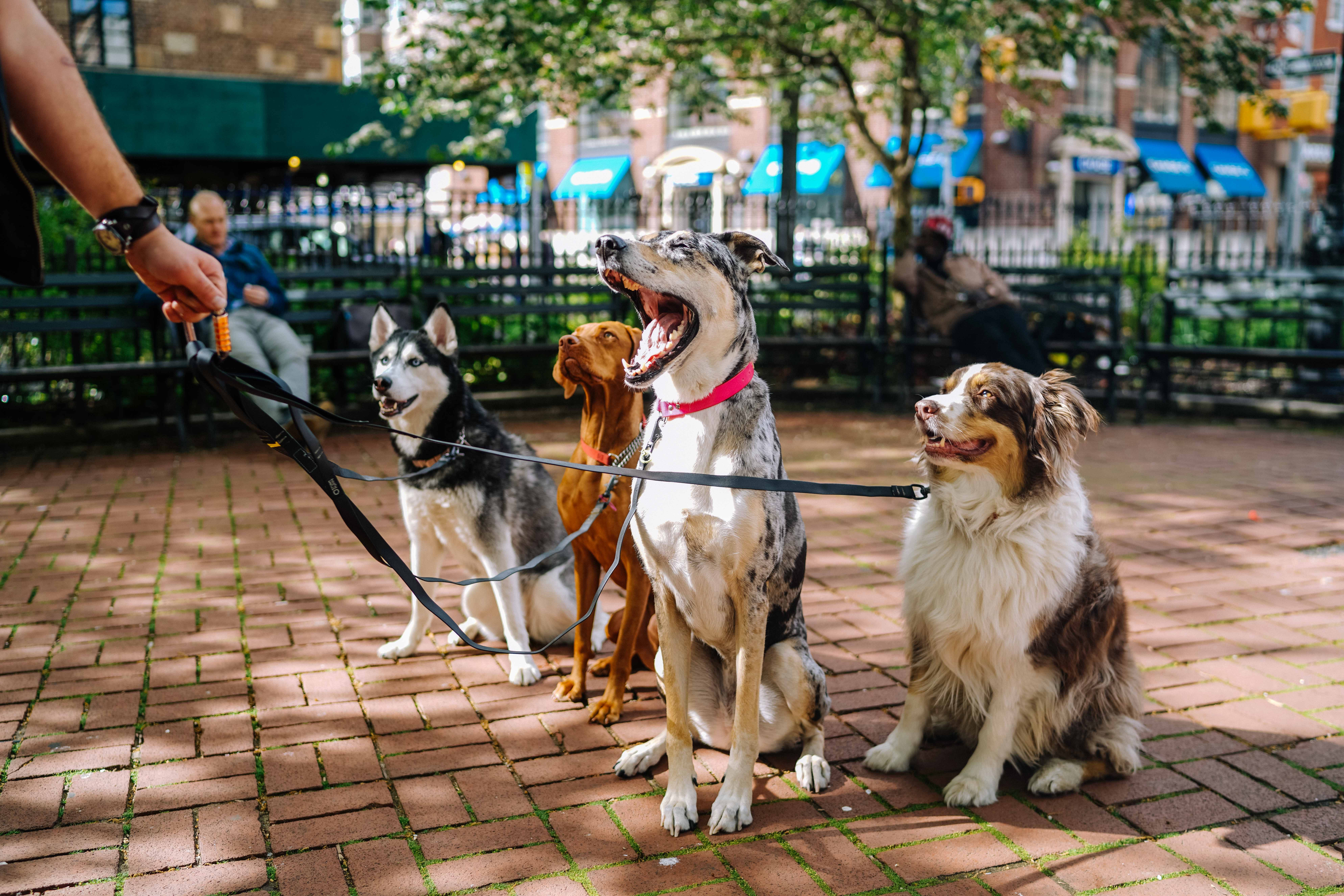 Problemas de comportamiento del perro - imagen 2